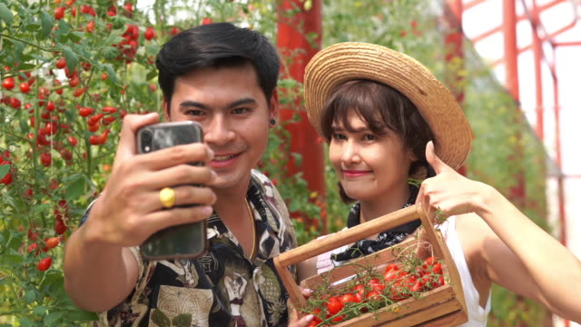 young couple farmer lover selfie together and showing basket of tomatoes in oganic farm , gmo food , biofood , alternative ifestyle , good condition , thumbs up gesturing - good condition stock videos & royalty-free footage