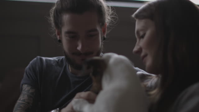 vídeos de stock e filmes b-roll de young couple giving treat to pet puppy jack russell - cachorro