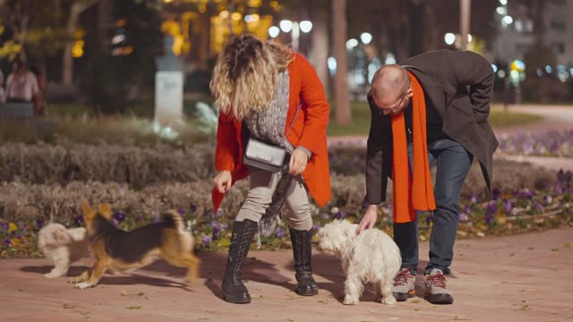 young couple is cuddling dogs in the park - young couple stock videos & royalty-free footage