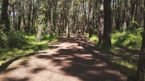 vídeos y material grabado en eventos de stock de joven pareja corriendo juntos en un bosque - carretera de tierra
