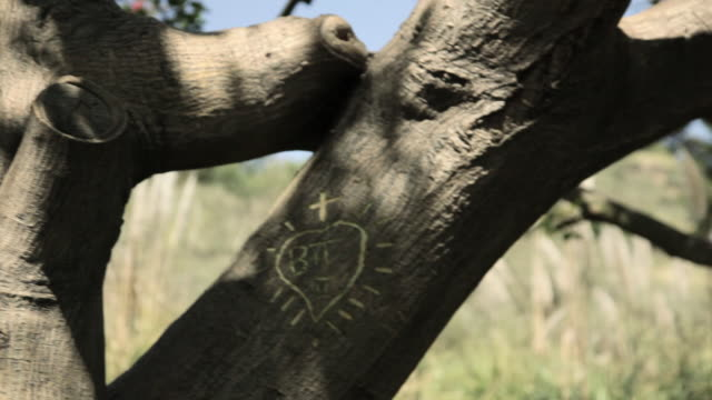 young couple kissing by tree with names carved in it - identität stock-videos und b-roll-filmmaterial