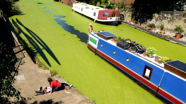 young couple lay on the canal side as birds fly over the green coating on regent's canal following a huge increase in the amount of duck weed on the... - alge stock-videos und b-roll-filmmaterial