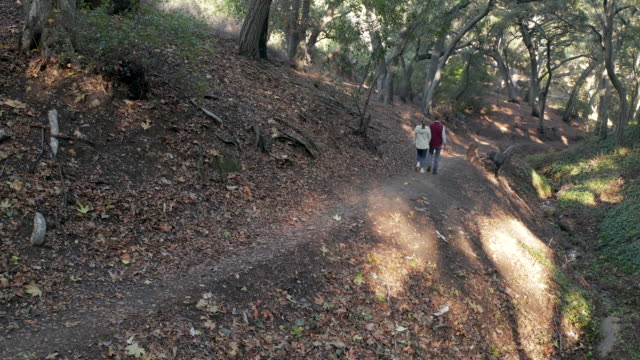 young couple on a hike in woods - 4k drone video - copertura di alberi video stock e b–roll