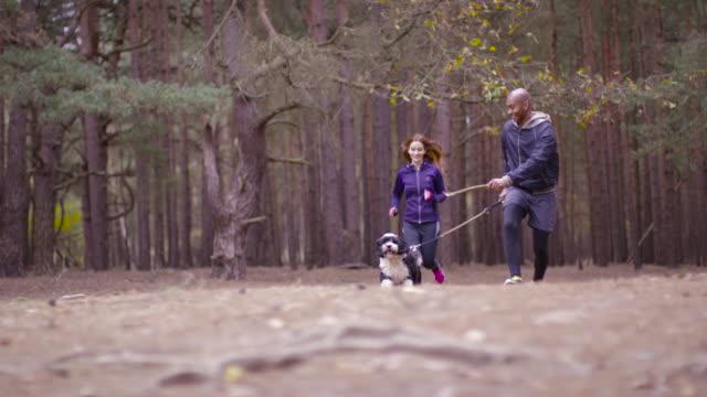 vídeos de stock e filmes b-roll de a young couple out with their dog on a forest walk in autumn - trela de animal de estimação