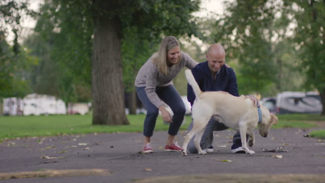 young couple petting their dog in a park - 30 39 years stock videos & royalty-free footage