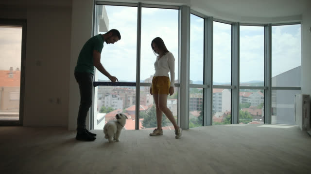 young couple playing with dog in new apartment - performing tricks stock videos & royalty-free footage