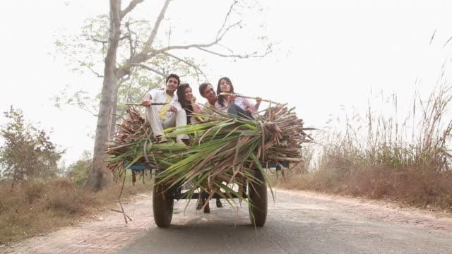young couple sitting on a ox cart - 牛車点の映像素材/bロール