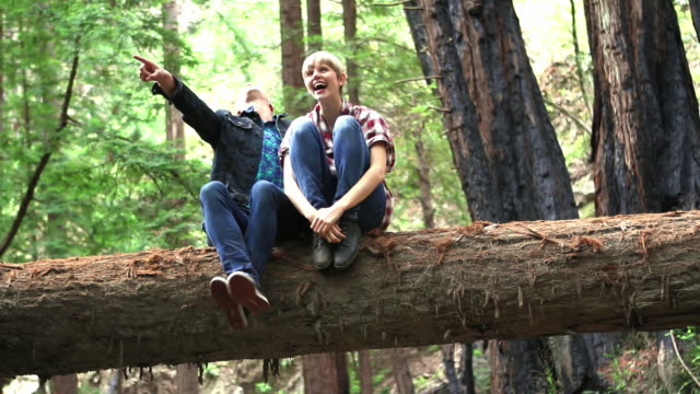 ws young couple sitting on fallen log pointing at something in the distance in redwood forest / big sur, california, usa - boyfriend stock-videos und b-roll-filmmaterial