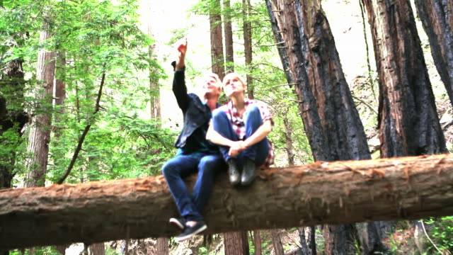 ws young couple sitting on fallen log pointing at something in the distance in redwood forest / big sur, california, usa - legs crossed at ankle stock videos & royalty-free footage