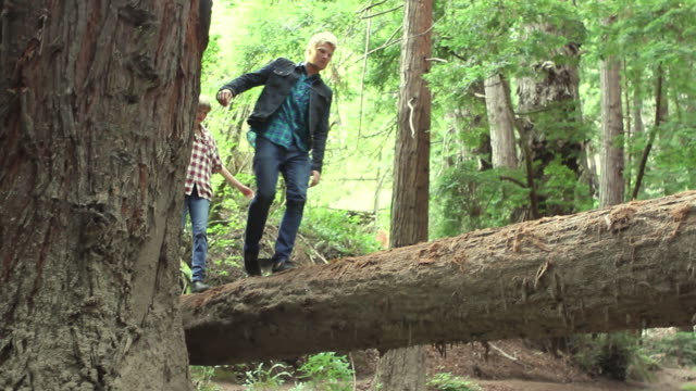 ws tu pan slo mo young couple walking across fallen log over creek and down path in redwood forest / big sur, california, usa - stamm stock-videos und b-roll-filmmaterial