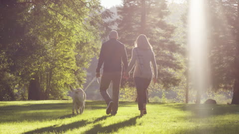 young couple walking dog in park - 30 39 years stock videos & royalty-free footage
