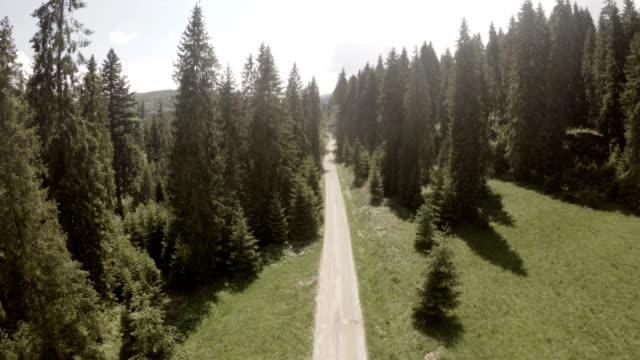 vídeos de stock e filmes b-roll de young couple's mountain adventure. aerial view - conífera
