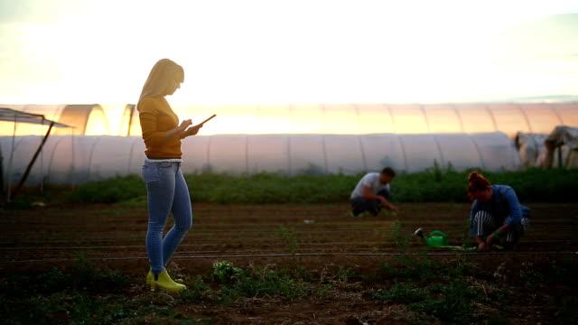 Junge süße landwirtschaftliche Techniker in einem Feld