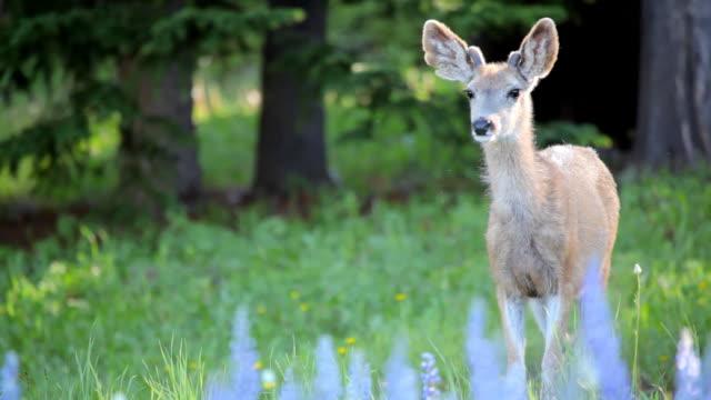若い鹿の森