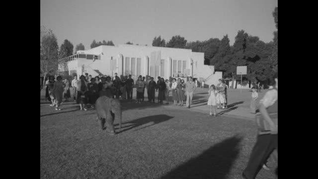 young elephant walking with numerous students then entering building on high school campus / note exact year not known - paramount building stock videos and b-roll footage