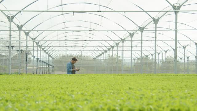 vídeos y material grabado en eventos de stock de young entrepreuenur at modern greenhouse using tablet technology to manage the irrigation. wide shot with copy space - hidropónica