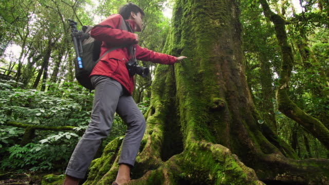 young environmentalist touch the tree trunk with his hand in the rainforest - tilt up stock videos & royalty-free footage