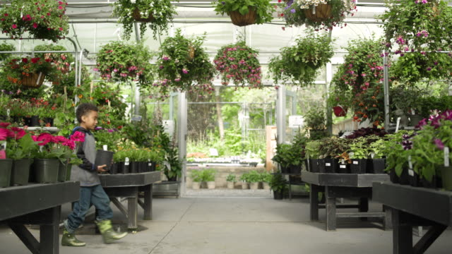 young family carrying flower pots in a greenhouse - whidbey island shop stock videos and b-roll footage