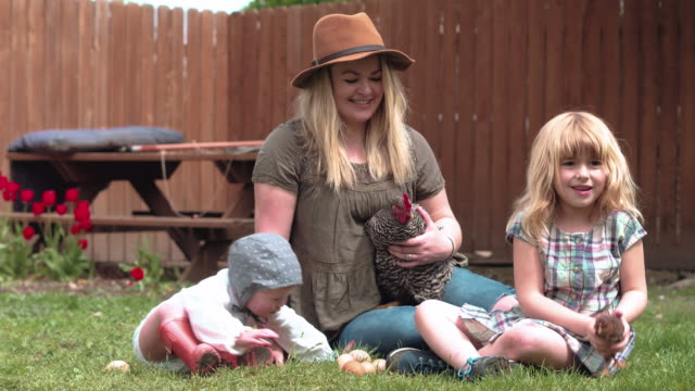 young family sitting in yard with chickens - chicken coop stock videos & royalty-free footage