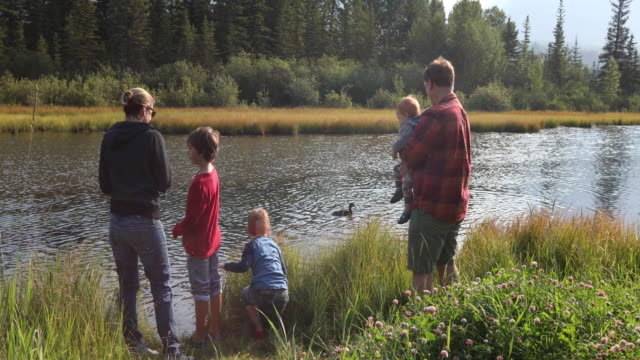 young family watch ducks float by, in mountain creek - small group of animals stock videos & royalty-free footage