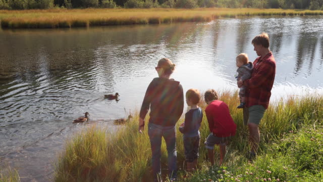 young family watch ducks float by, in mountain creek - duck stock videos & royalty-free footage