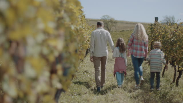 young family with two children in vineyard - blonde hair stock videos & royalty-free footage