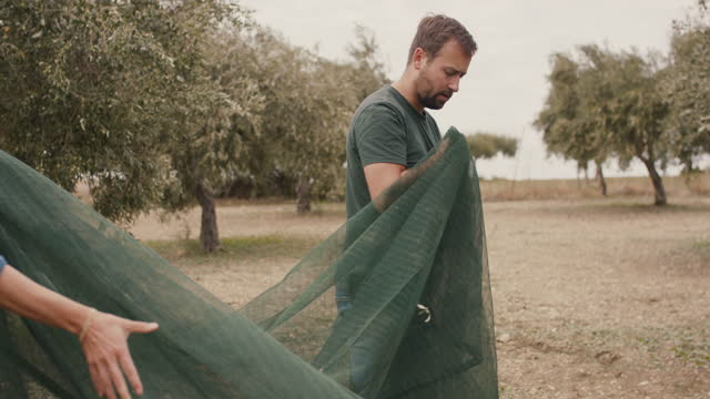 young farmer couple harvesting olives together - orchard stock videos & royalty-free footage