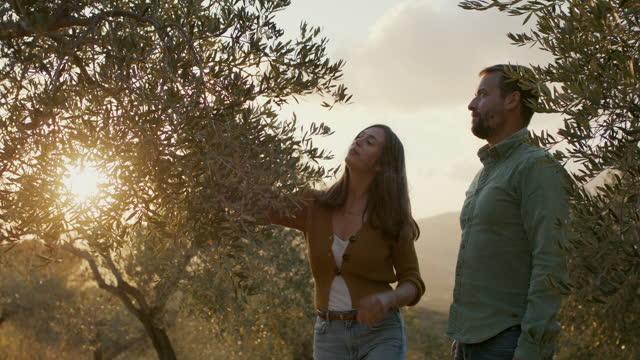 vidéos et rushes de young farmer couple looking at their olive trees - s'impliquer à fond
