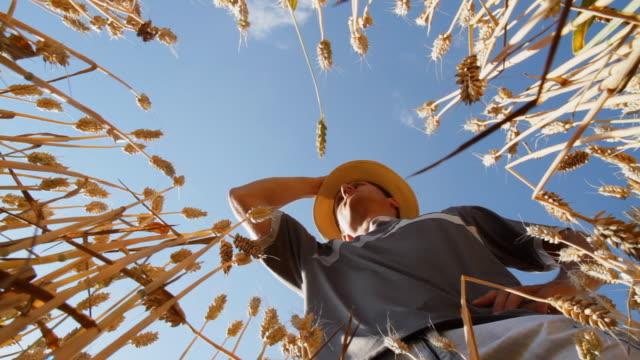 vídeos de stock e filmes b-roll de hd: jovem agricultor em um campo de trigo - vista de baixo para cima