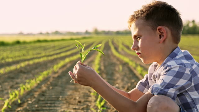 ds young farmer in the middle of a corn field - slovenia stock videos & royalty-free footage