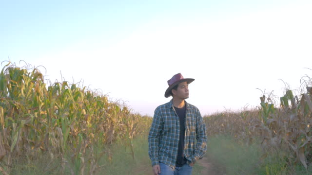 young farmer walking in corn field - sample holder stock videos & royalty-free footage