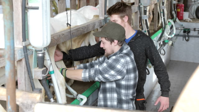 ヤギ搾乳部屋の若い農家とシニア農家 - シェーブルチーズ点の映像素材/bロール