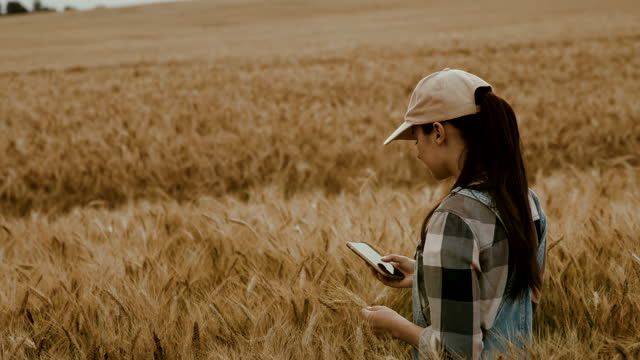 slo mo young female farmer using her smartphone in the middle of a field of ripe wheat - cap stock videos & royalty-free footage