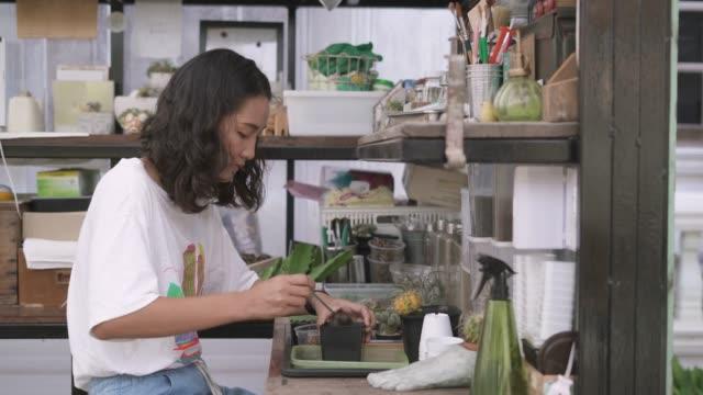 vidéos et rushes de jeune femelle plantant l'usine de cactus - cactus pot