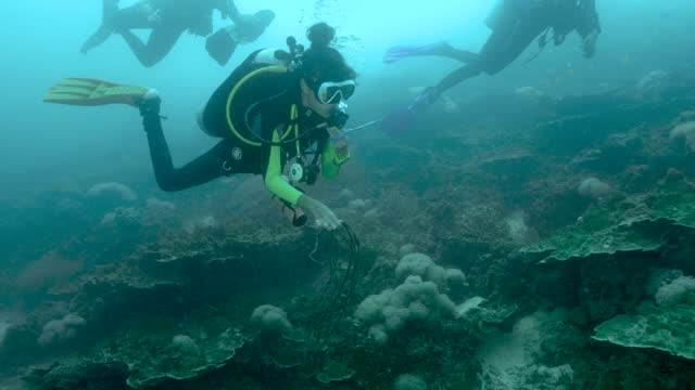 young female scuba diver removing fishing net from coral reef - aqualung diving equipment stock videos & royalty-free footage
