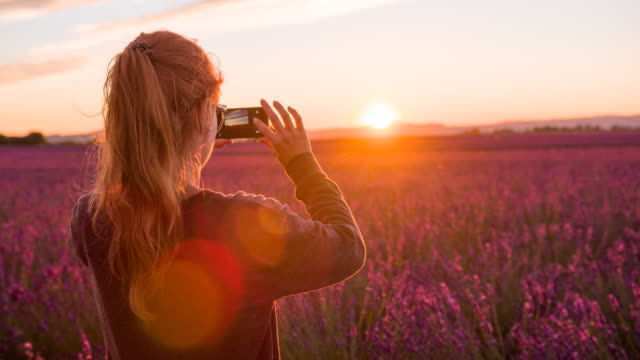 young female tourist taking pictures of lavender fields at sunset - photographing stock videos and b-roll footage