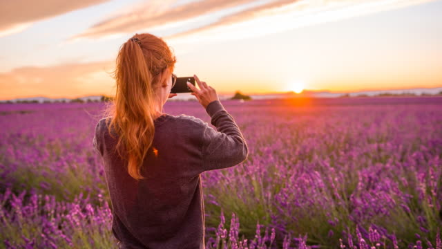 Young female tourist taking pictures of lavender fields at sunset