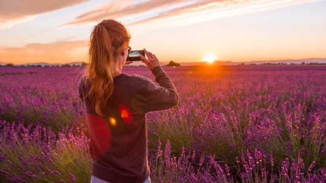 young female tourist taking pictures of lavender fields at sunset - provence alpes cote d'azur stock videos & royalty-free footage