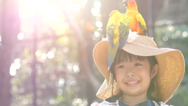 young girl enjoy bird in the nature - exploration stock videos & royalty-free footage