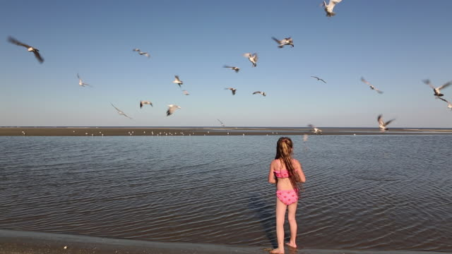 ms young girl feeding seagulls at beach / st. simon's island, georgia, united states - one girl only stock videos and b-roll footage