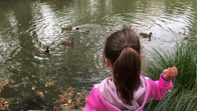 Young girl feeds birds in a water pond