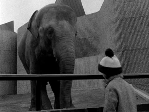 A young girl feeds peanuts to an elephant at London Zoo