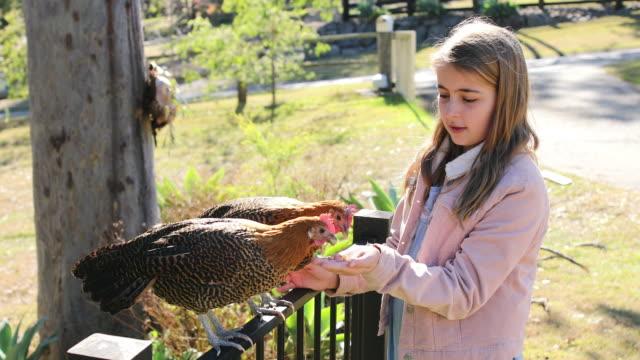 stockvideo's en b-roll-footage met jong meisje hand die huisdieren kippen voedt - hen
