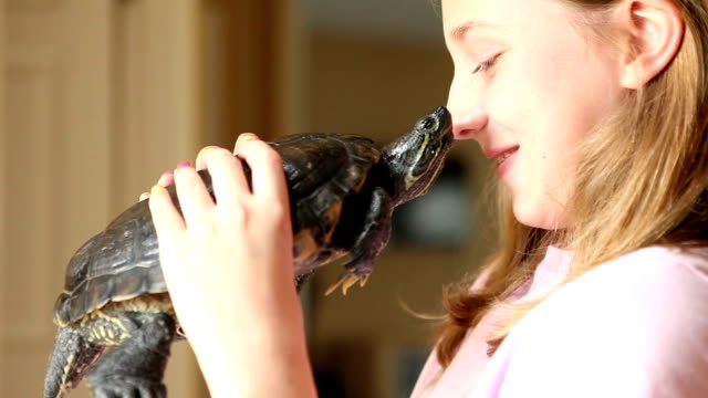 stockvideo's en b-roll-footage met young girl holding turtle - huisdier