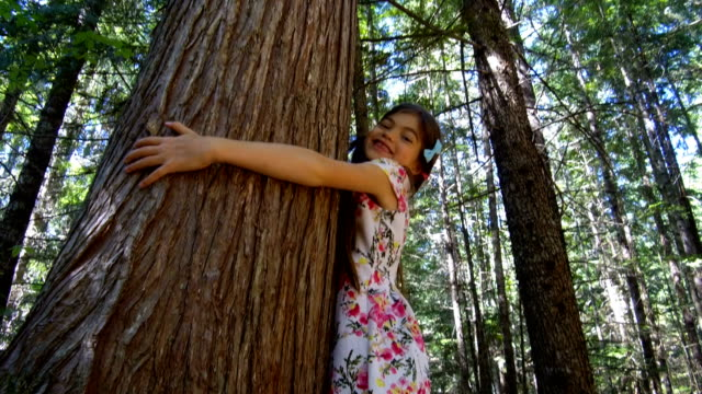 young girl hugging an old growth tree - tree hugging stock videos & royalty-free footage