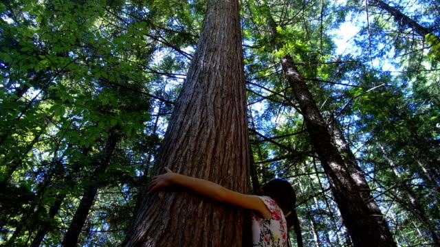 young girl hugging an old growth tree - children only stock videos & royalty-free footage