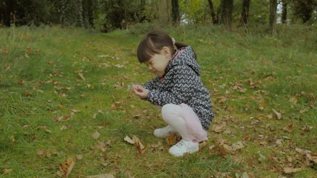 森の中で秋のナッツを摘む若い女の子 - 幼児点の映像素材/bロール