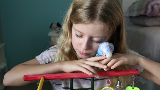 ペットバジェリガーと遊ぶ若い女の子 - セキセイインコ点の映像素材/bロール