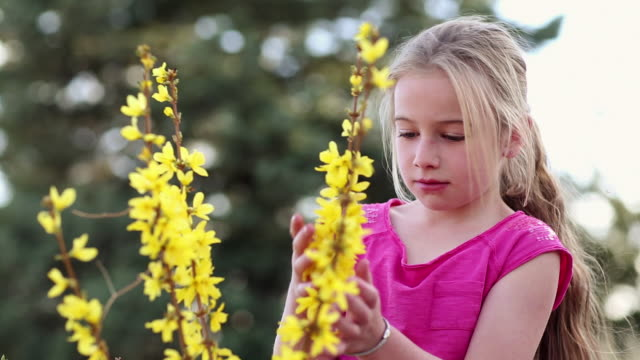 vidéos et rushes de ms young girl playing with yellow flowers outdoors / santa fe, new mexico, united states - cheveux blonds