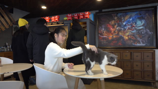 young girl plays with a shorthair cat in a pet theme cafe on the top floor of a shopping mall china's pet industry reached 1708 billion yuan in 2018... - pets stock videos & royalty-free footage